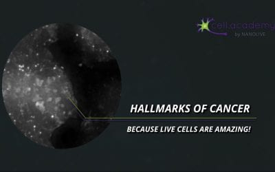 The Hallmarks of Cancer