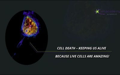 How cell death keeps us alive!